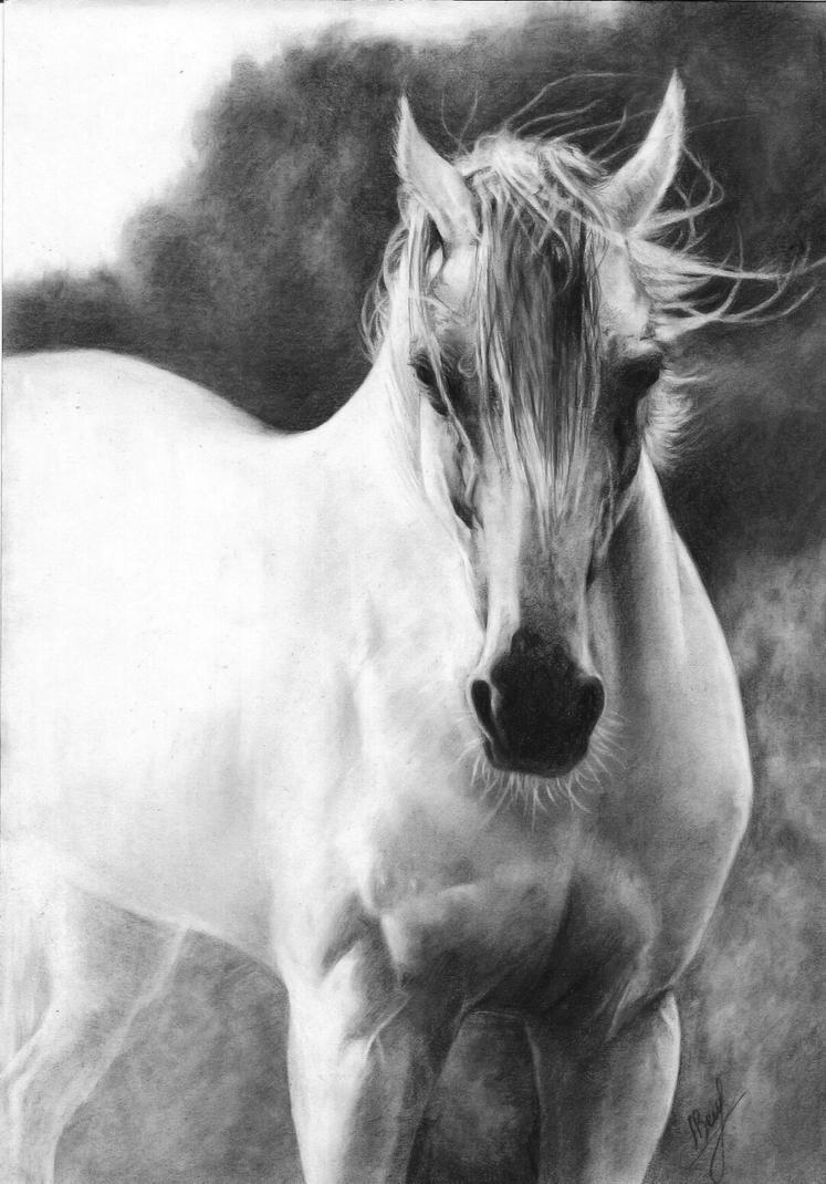 White Arabian horse by Annzell on DeviantArt