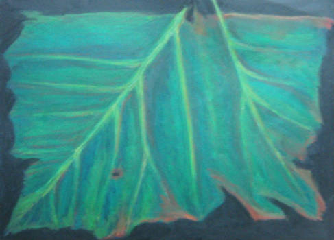 Double Leaf - crayon