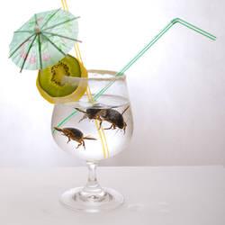Beetle Juice by armene
