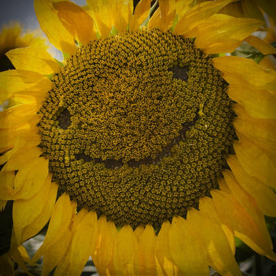 senyuman manis
