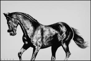 Race horse by Twist-Again