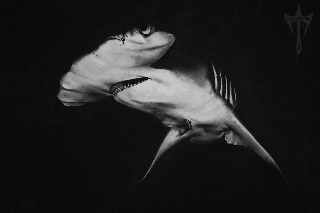 Realistic Hammerhead Shark Charcoal Drawing by EchoesinthefogRealistic Shark Drawing