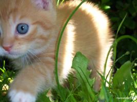 cat... by hardrafello