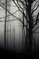 Silent Moment by BranislavFabijanic
