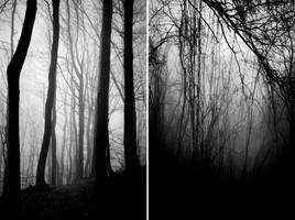 Into the Forest by BranislavFabijanic