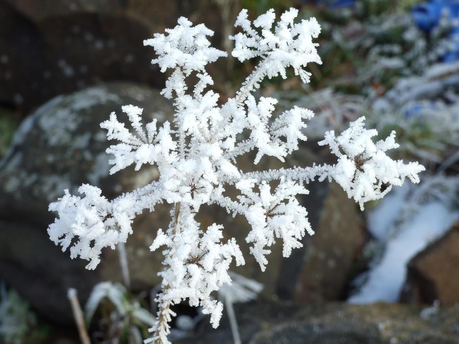 winter's flower by chemai on deviantart, Beautiful flower