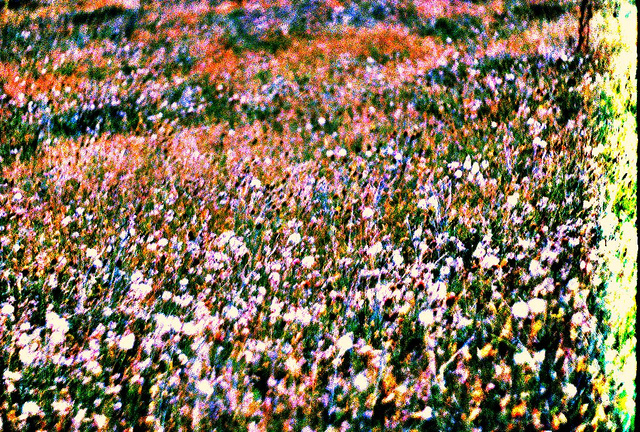 Flower Field by BlueEire