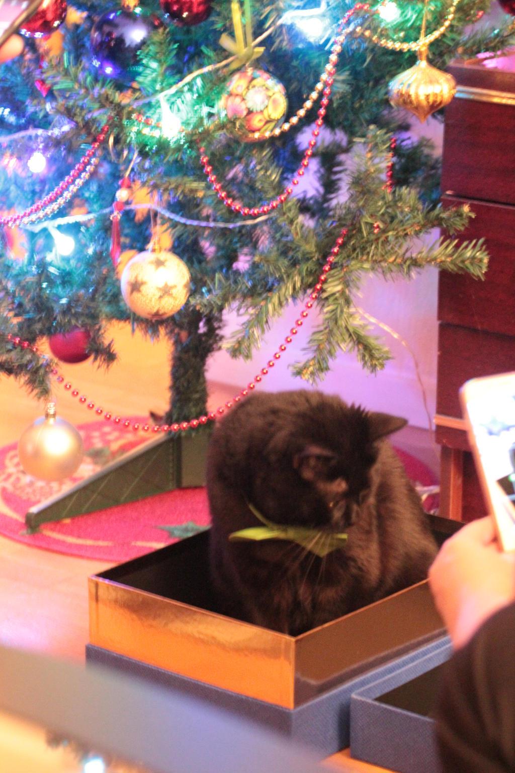 Christmas cat by ShishiNoSeirei
