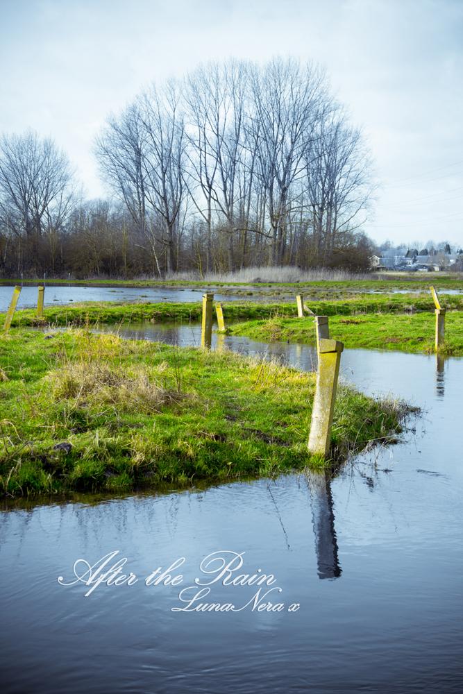 After the Rain I by Luna-Nera-x