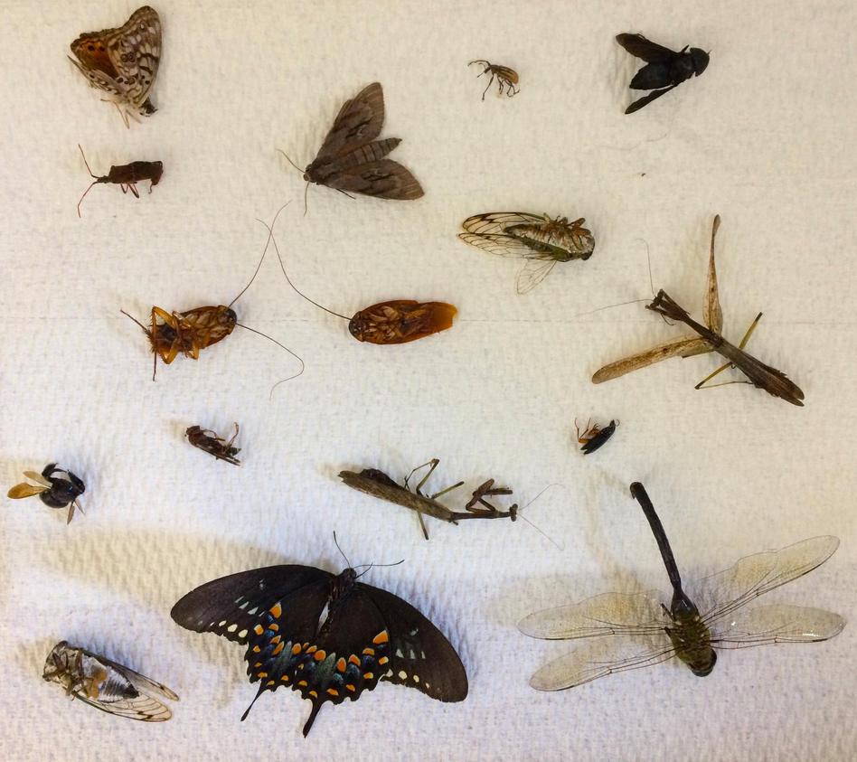 Bugs by shastasnow