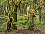 Beech trees on top of the Velmerstot