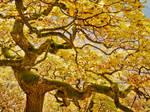 Dancing oak dryad - fall yellow