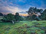 Sunrise over the Juniper Grove by zeitspuren