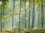 Sunlit misty autumn forest by zeitspuren