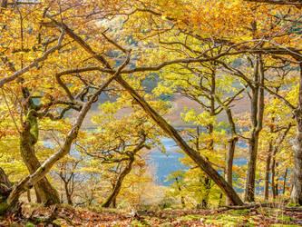 Oaks above the Eder river #II, Lindenberg, Germany by zeitspuren