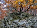Autumn oaks and rocks at dawn,  Daudenberg, #1 by zeitspuren