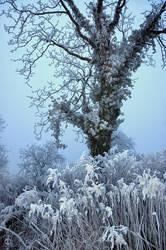 Ice Tree 01