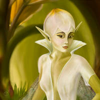 White Tulipfae by theogroen