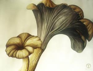 Mushroom Study 01 by theogroen