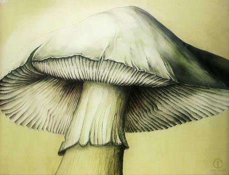 Mushroom Study 02