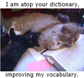 Kitty caption- dictionary by grasspilferer