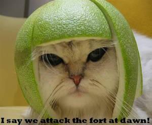 Kitty caption- Fort