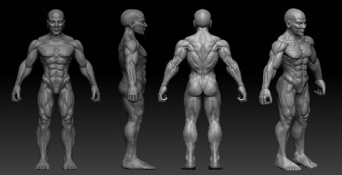 Practising Anatomy for 3D printing