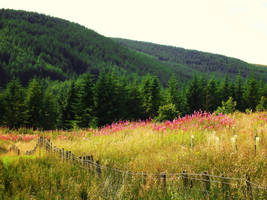 High Appin Forest by tartanink
