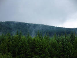 High Appin Forest Mist by tartanink