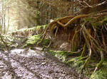 Triffid Roots