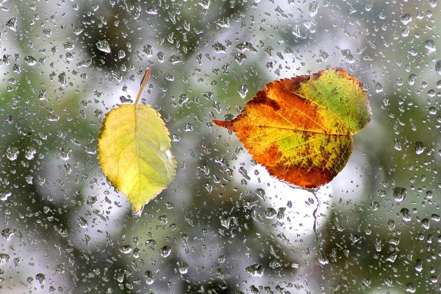 Leaves in the Rain by tartanink
