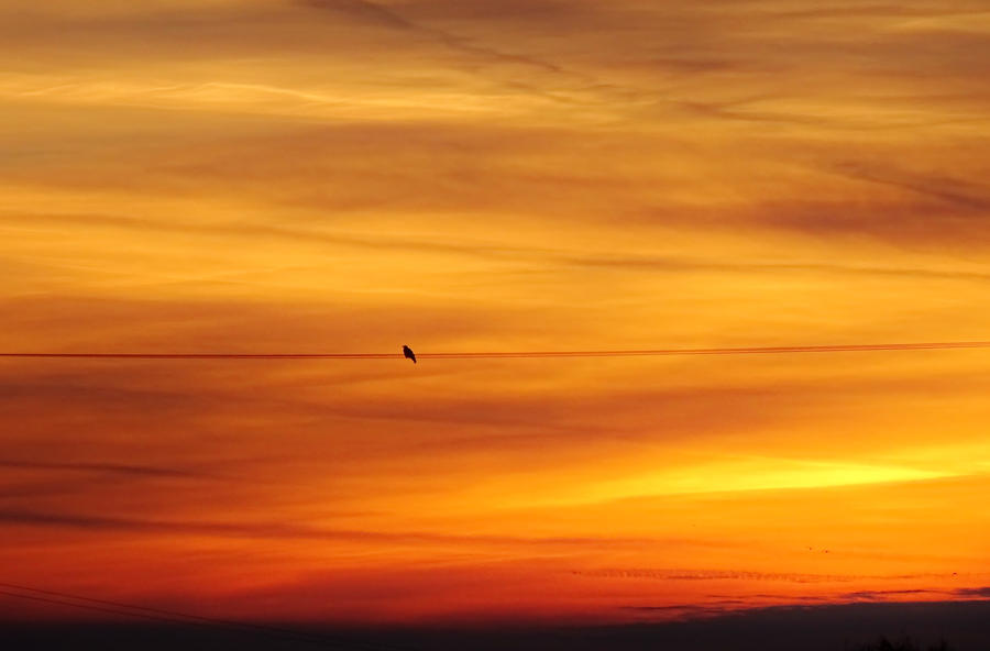Early Morning Bird on a Wire by tartanink
