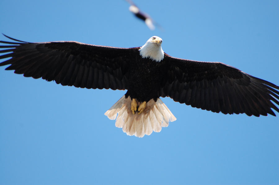 Eagles Wingspan by nkotech on ...