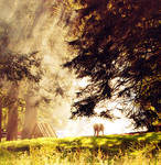 .: fog :. by biszkopciik