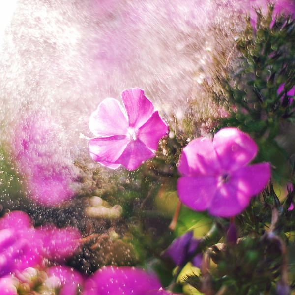 .: rainy flowers :. by biszkopciik