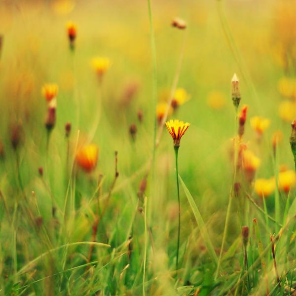 http://fc00.deviantart.net/fs24/i/2009/248/0/8/___sunny_flowers____by_biszkopciik.jpg