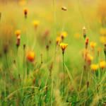 .: sunny flowers :. by biszkopciik