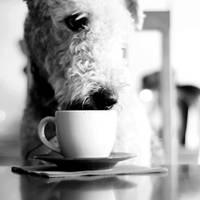 .: tea :. by biszkopciik