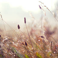 .: morning dew :. by biszkopciik