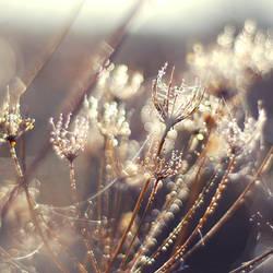 .: shining :.