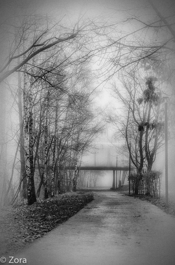 FOG by stengchen