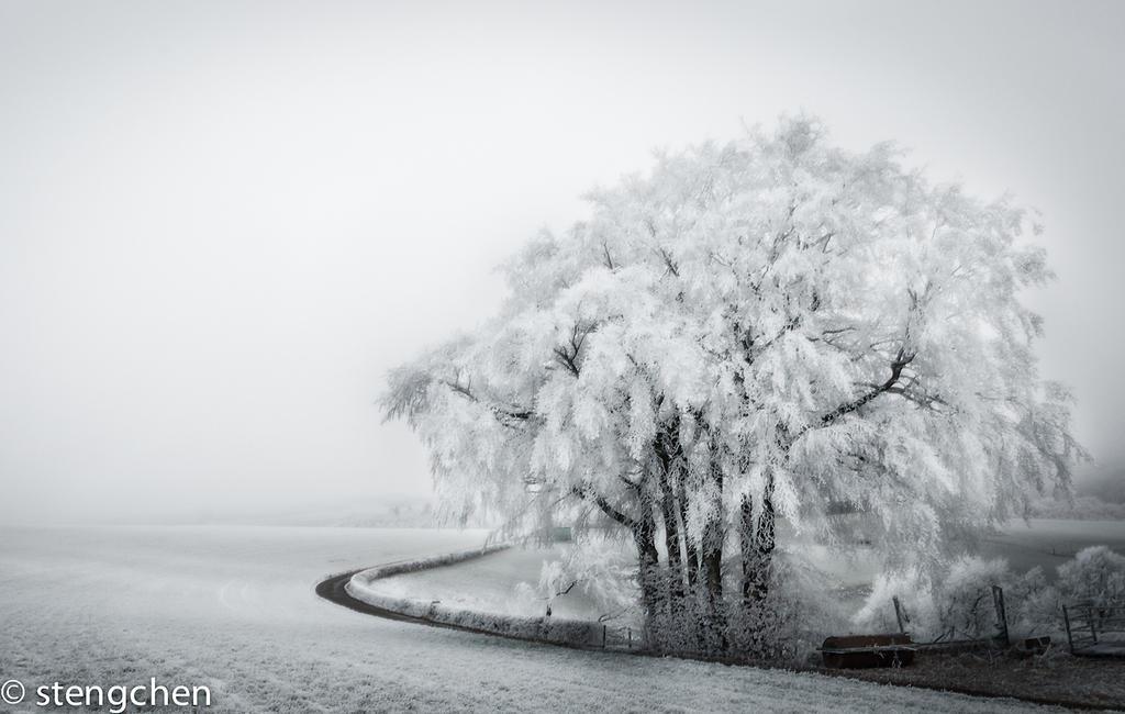 Winterwonderland by stengchen