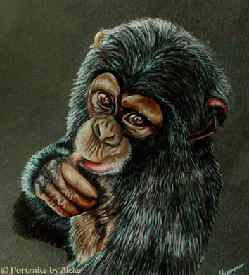 Baby Chimp by stalksthedawn on DeviantArt