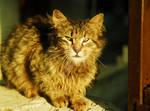 dirty cat by biohazardemre