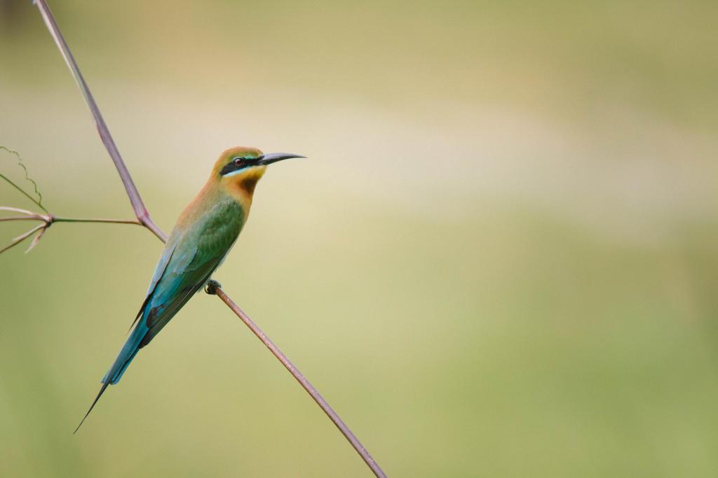 Bird by slumberbreeze