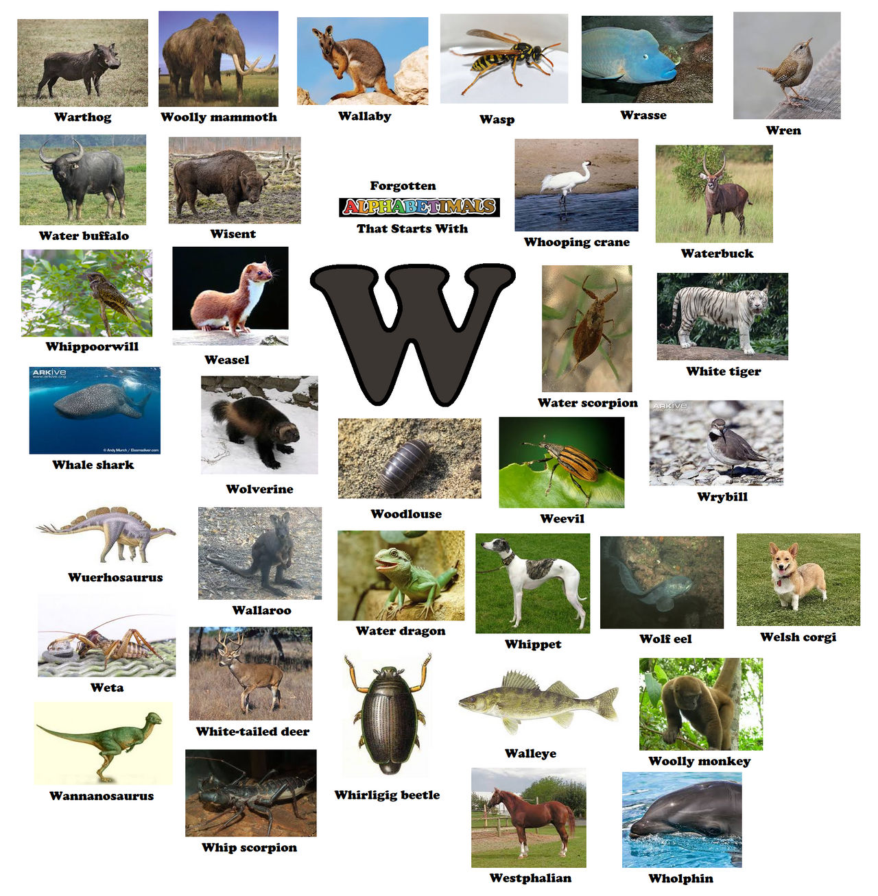 What Animal Starts With W