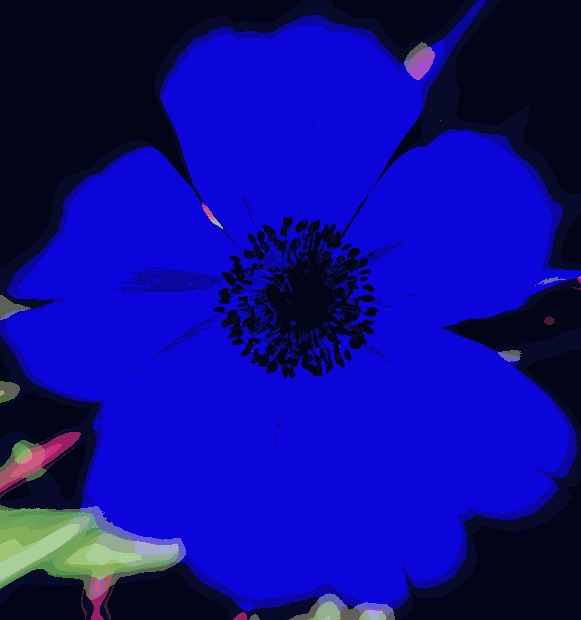 I M So Creative With My Names Blue Flower By Amyinblue On Deviantart