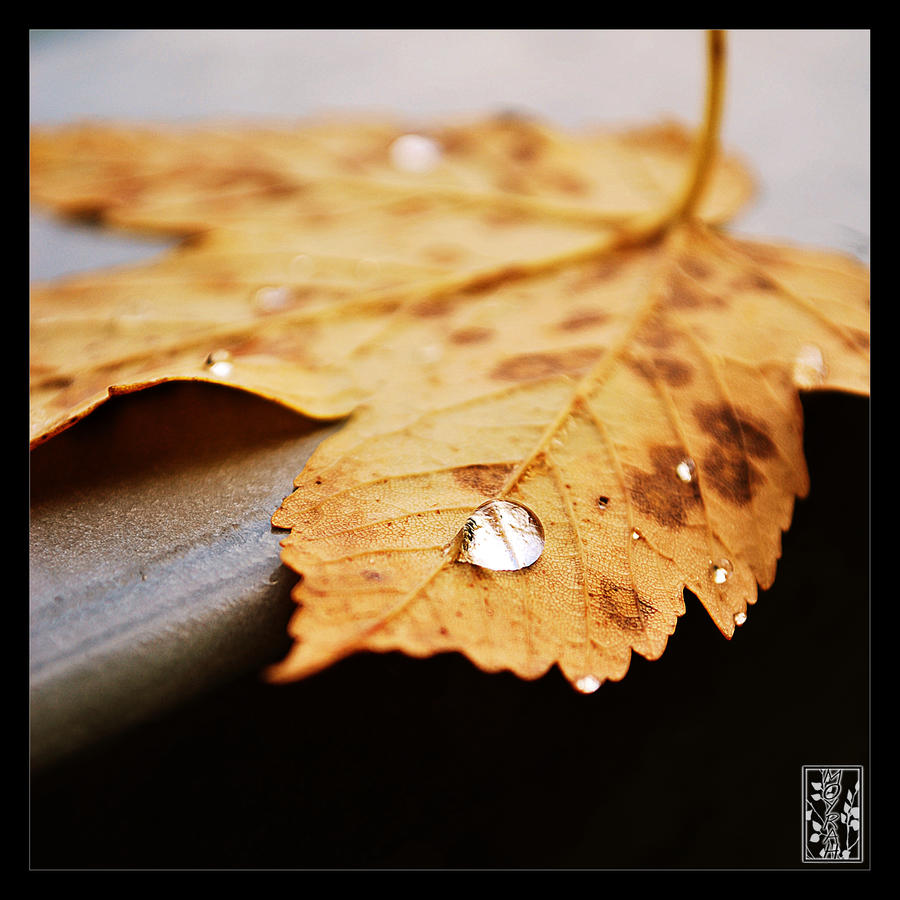 Lonely Leave by Moyrah