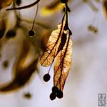 Limetree by Moyrah