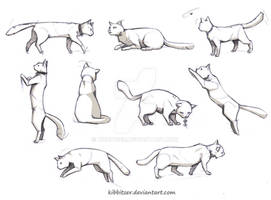 Cat reference